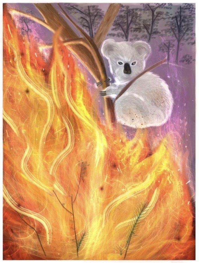 Fires+in+Australia
